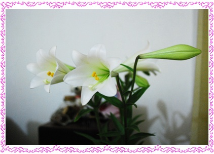 Lily 210409