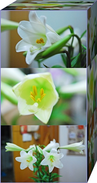 Lily 220409