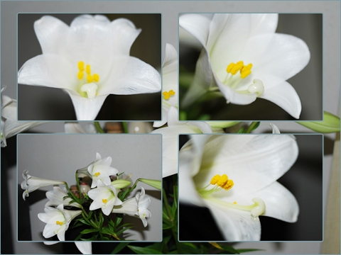 Lily 240409